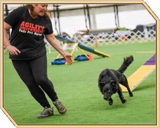 [AU-034] Train Your Brain: Getting Into The Right 'Head Space' For Dog Sports